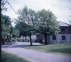 52013_Auerhahn_bei_Stuetzerbach_ca._1960.jpg